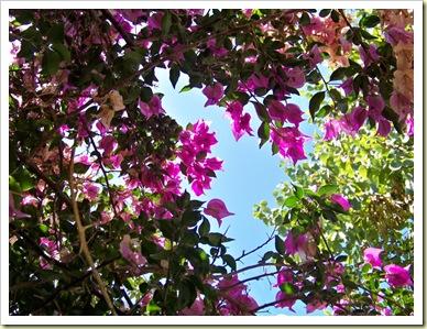 fleurs vacances 3