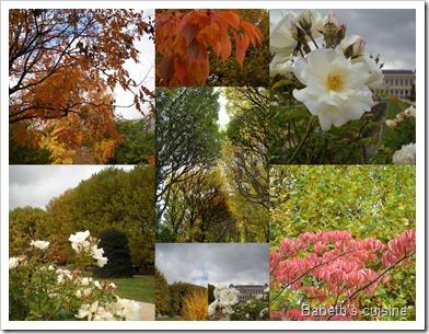 couleurs du jardin des plantes