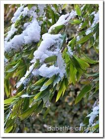 bambou sous la neige 2