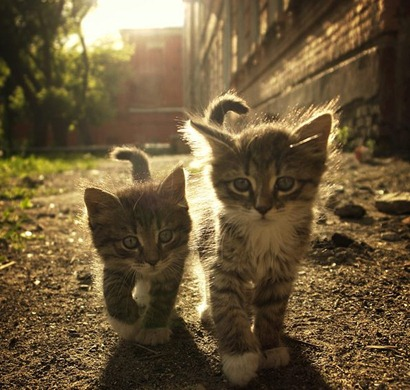 newfriends