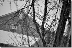 january snow 010