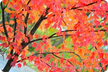 fall october 2009 004