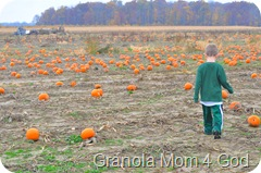 pumpkin patch, awana 088