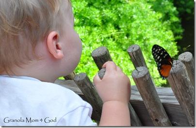 Butterfly zoo 024