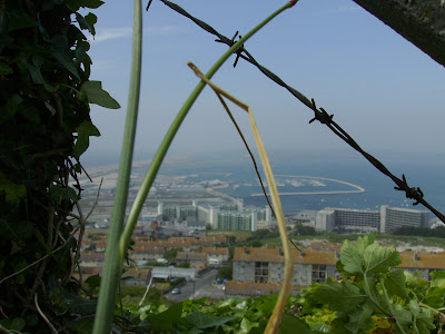 barbed-view