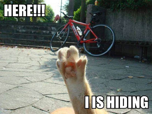 HERE!!! I IS HIDING