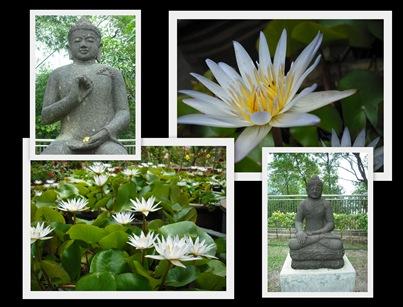Lotus & Budha