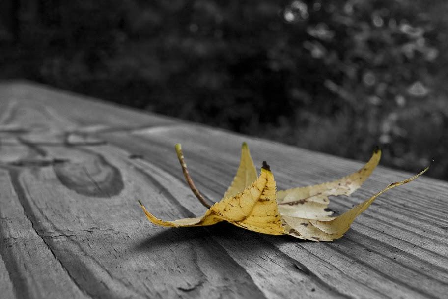 IMAGE: http://lh6.ggpht.com/_ti_aShlyB7A/TOdOXb8xn1I/AAAAAAAAEuA/8rZmA-OMrak/s912/IMG_1810-yellow%20leaf.jpg