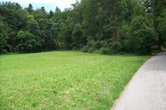 Forest in Monmollin