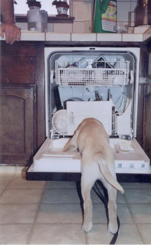 Baby Clement tries to climb in the dishwasher.