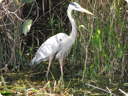 Everglades Highway 036