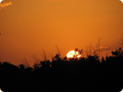 Everglades NP 030