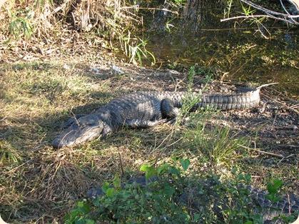 Everglades NP 116