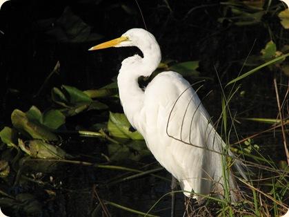Everglades NP 125