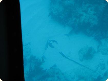 John Pennekamp Glass Bottom Boat 019