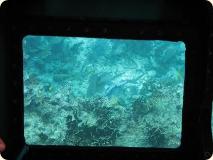John Pennekamp Glass Bottom Boat 042