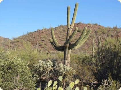 Saguaro National Park 029