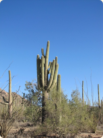 Saguaro National Park 034