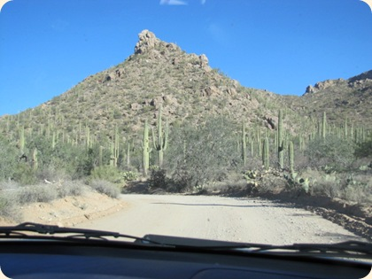 Saguaro National Park 035