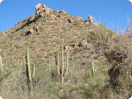 Saguaro National Park 038