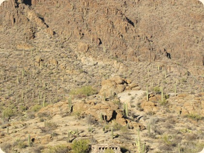 Saguaro National Park 063