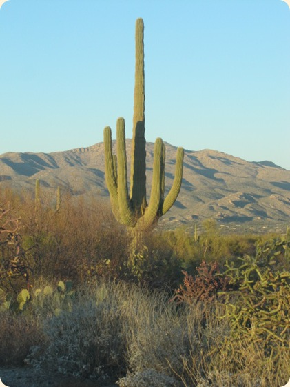 Saguaro National Park 084