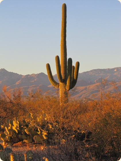 Saguaro National Park 085