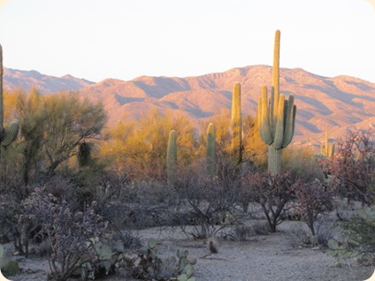 Saguaro National Park 090