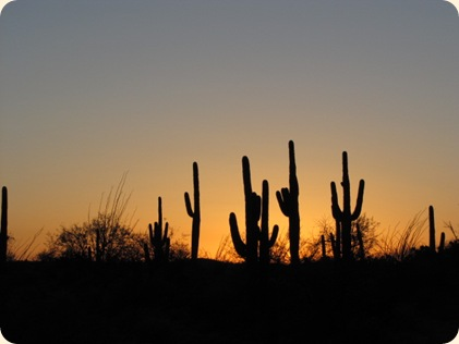 Saguaro National Park 102