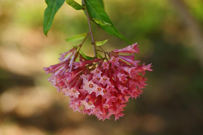 Flores, Pink
