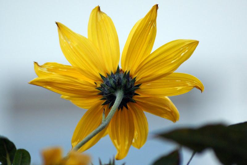 Flores de Dezembro