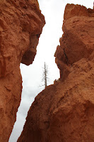 BryceCanyonNP_20100818_0124.JPG Photo