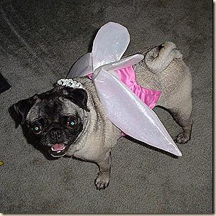 Fairy Gidget 3