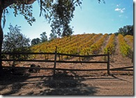 Fall-Vineyard-on-Willow-Cre
