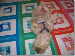 maggie on quilt 5