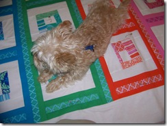 maggie on quilt