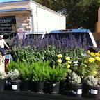 Plant Truck.jpg