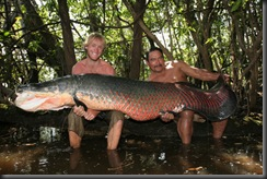 Giant-Fishes-around-the-world-11