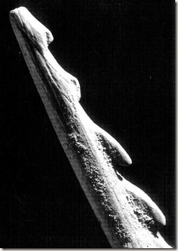 arpón hallado en el Tossal de la Roca