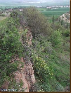 Zona occidental castro Sansol
