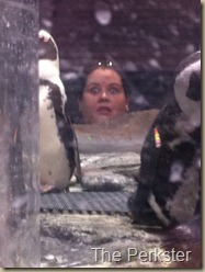 I see penguins