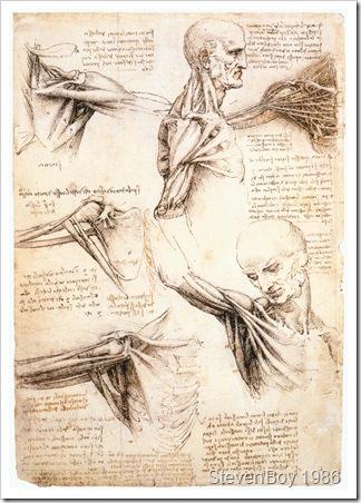 Anatomicalstudiesoftheshoulder