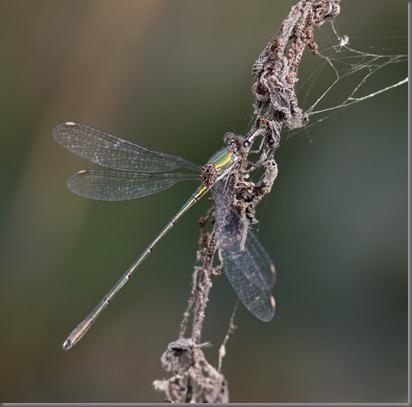 10_09_20_marshside_054_willow_emerald