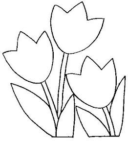 TULIPANES (5).jpg