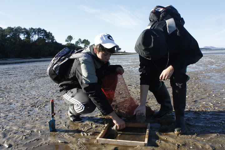 Toma de mostras de moluscos bivalbos