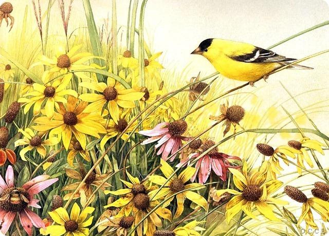 bird10[8]