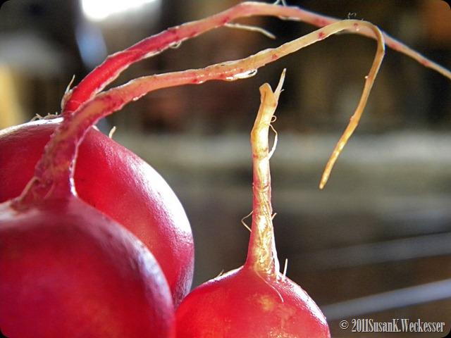 radishes 1