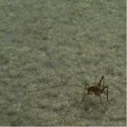 Basement grasshopper