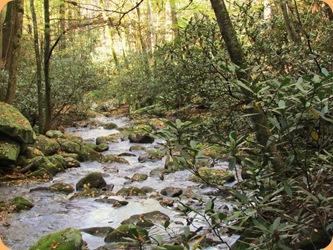 Roaring Fork stream 4