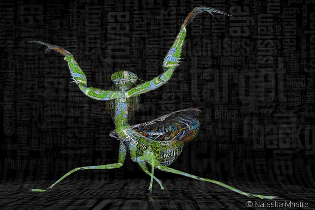 Mantis_fight_posture2 small